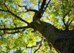 Bewegingsbos Maashorst: je kunt de boom in!